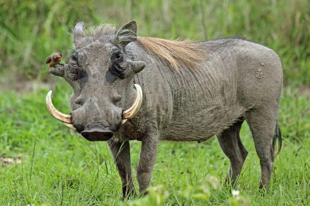 Какова роль животных в природе и жизни человека? 20 примеров, почему животные важны— природа мира