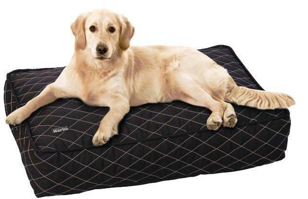 Матрасы для собак крупных и мелких пород: виды, советы по выбору