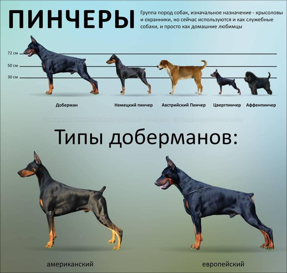 8 самых древних пород собак, которые больше тысячи лет живут рядом с человеком