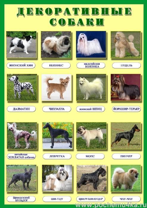 Служебные собаки: описание, популярные породы группы