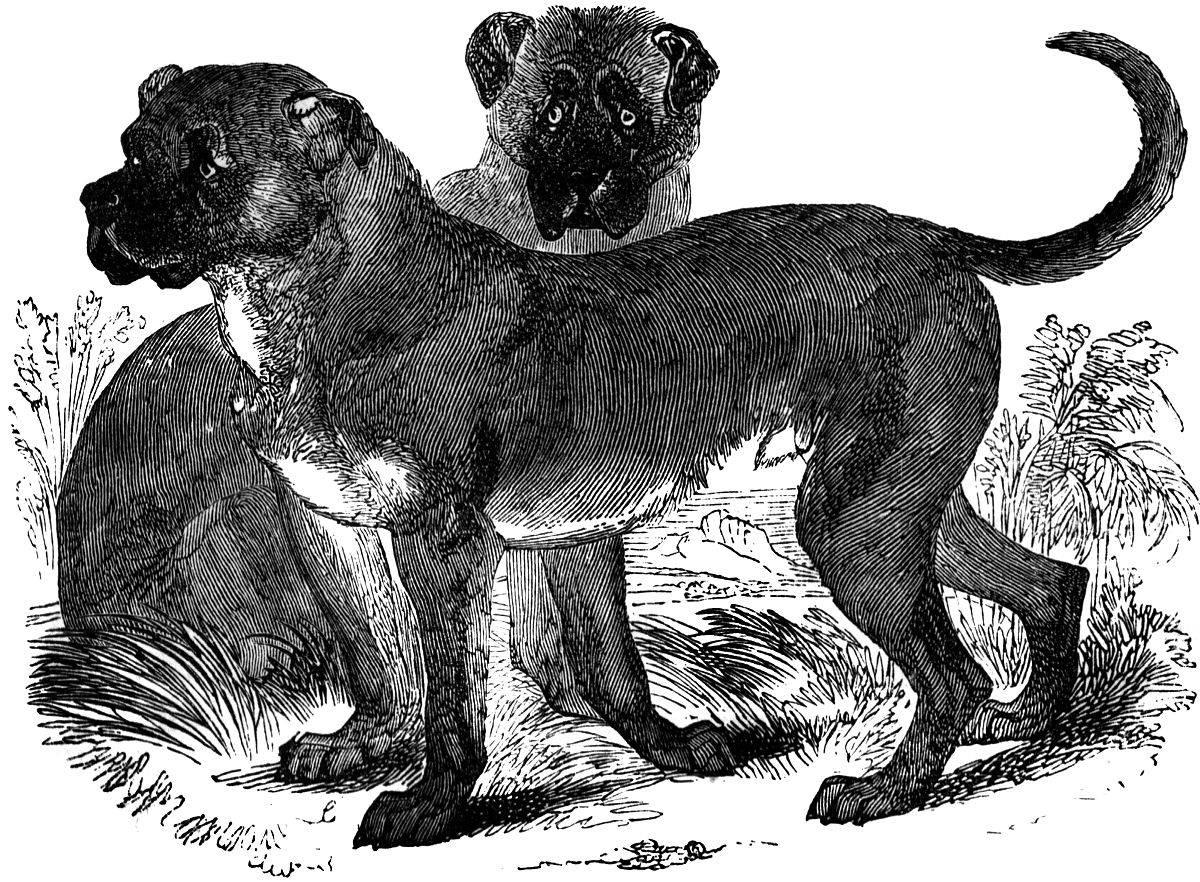 Самые древние породы собак: история появления и преданной службы