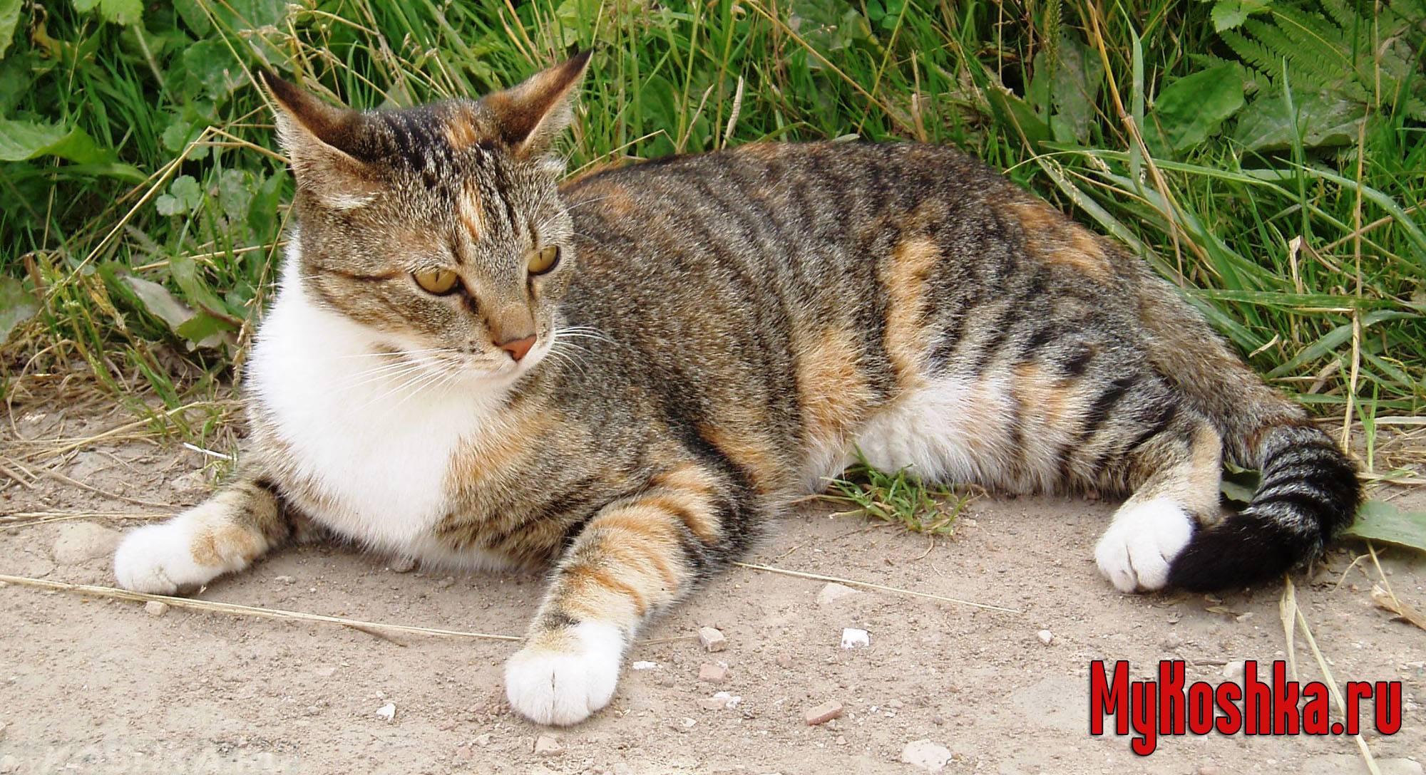 Если кошка потерялась она придет домой. как найти кошку если она убежала из квартиры, потерялась, на улице если не отзывается и боится всего, дома, в лесу и на даче