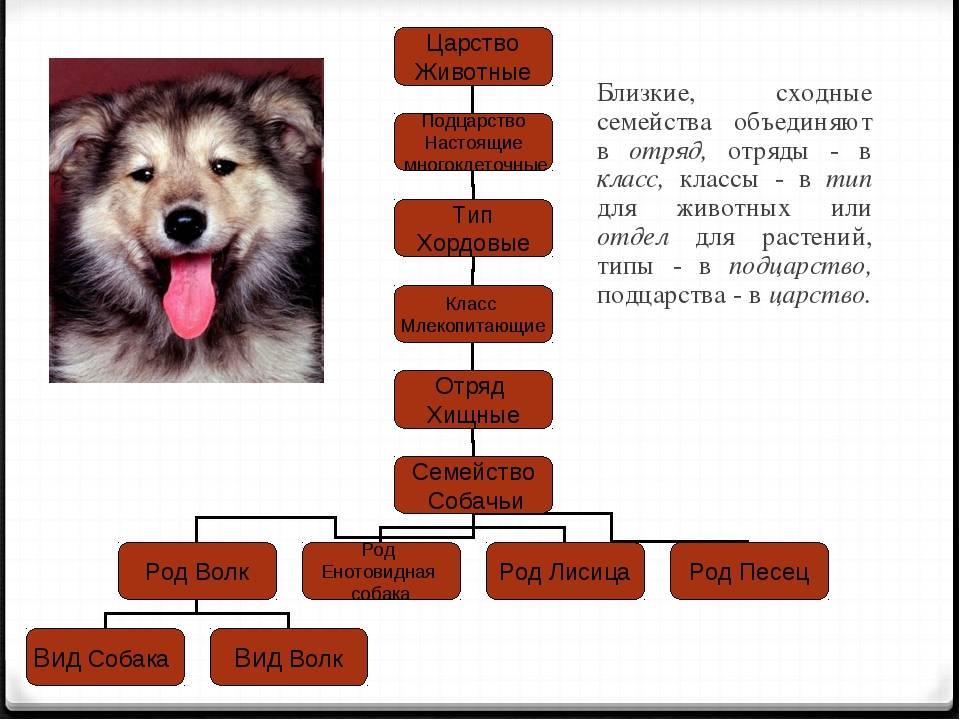 Классификация пород fci