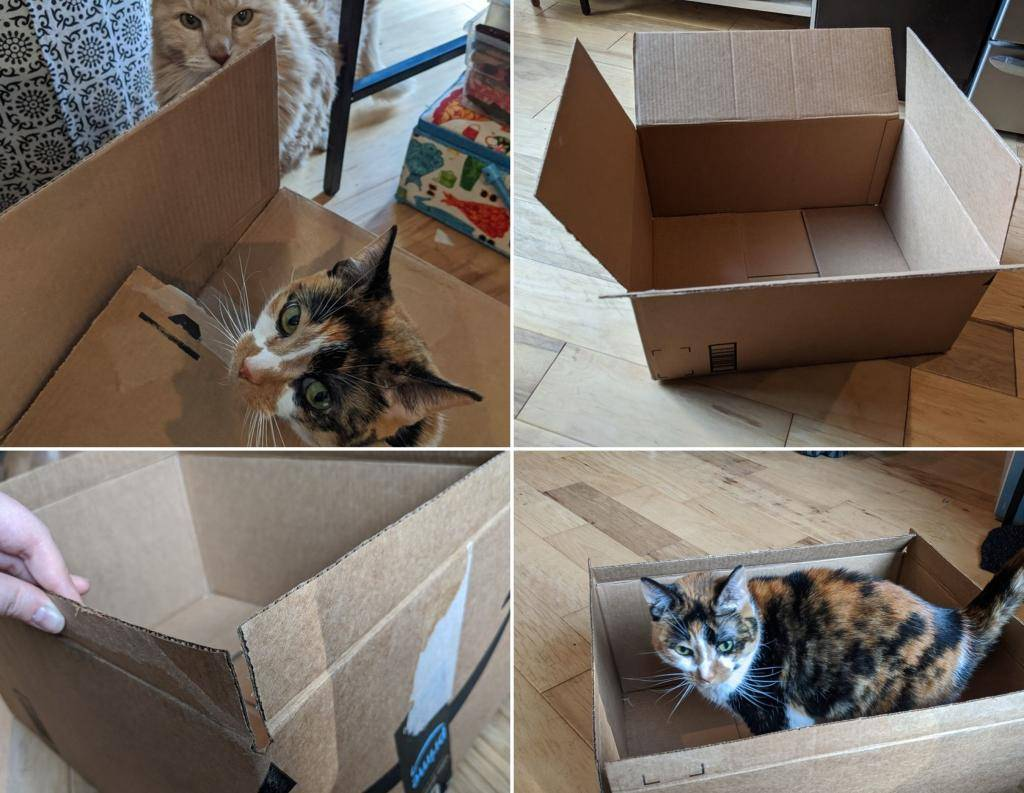 Домики для кошек из картонных коробок своими руками (36 фото): пошаговая инструкция по изготовлению домика для котов из картона и футболки