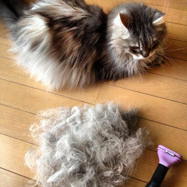 Повышенная линька у кошки. почему и как с ней бороться?