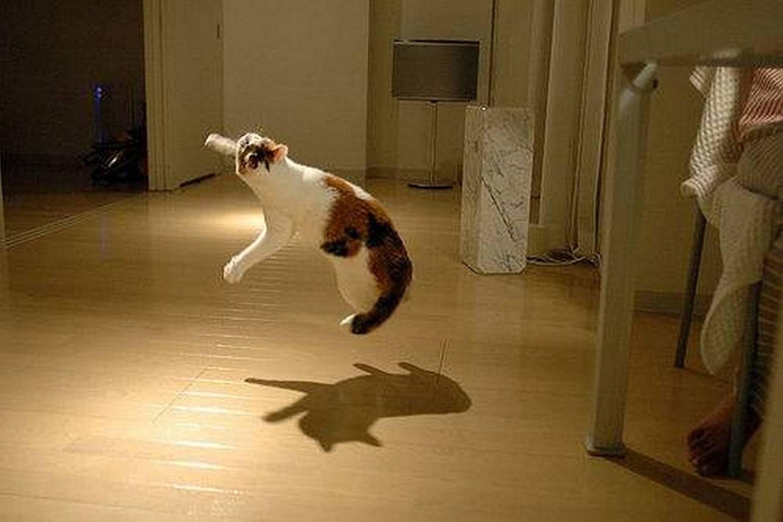 Крик в ночи: почему орёт кот