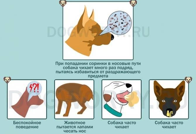 Почему собака кашляет как будто подавилась?