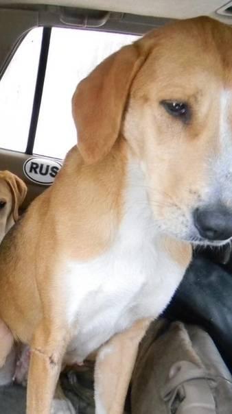 Какую кличку лучше дать собаке кобелю: список оригинальных русских имен