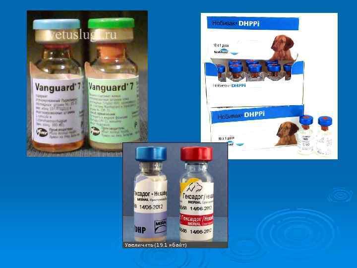 Болезни печени у кошек и их лечение с помощью диетического корма для кошек | hill's pet