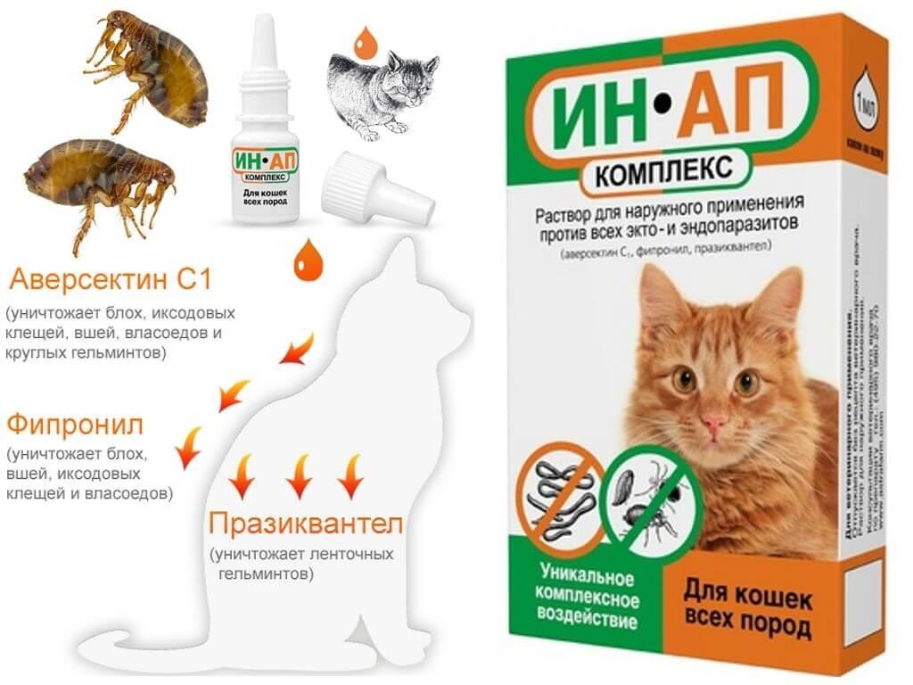 Средства от блох для кошек - топ 30 лучших в домашних условиях
