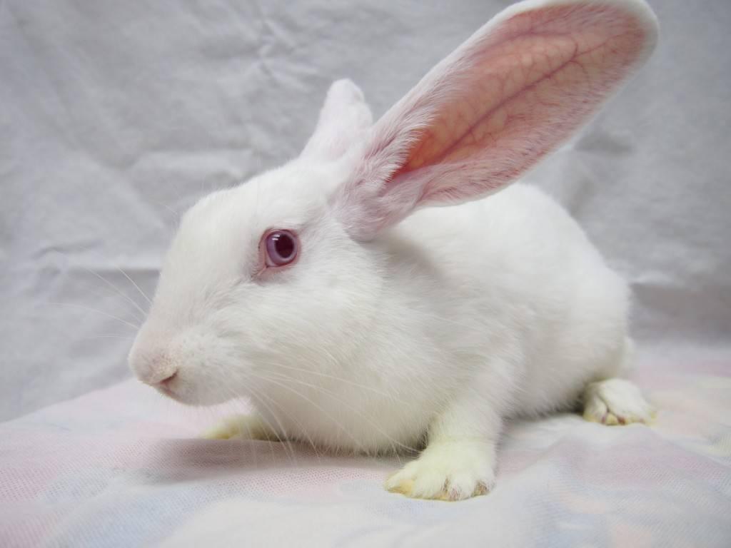Как назвать кролика: имена для кроликов мальчиков и девочек