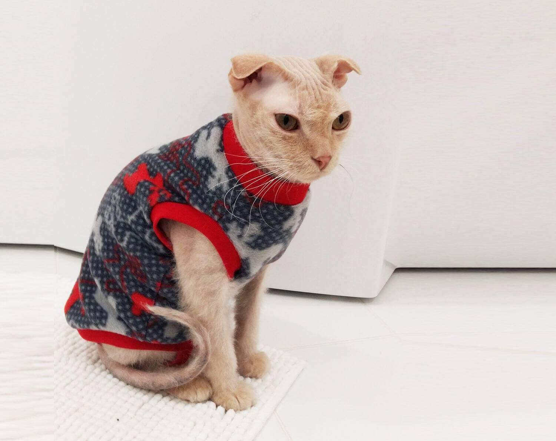 Одежда для кошек своими руками: как сшить без машинки, выкройки костюма и комбинезона