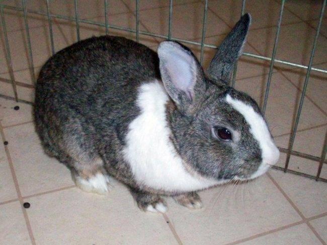 Клички для кроликов. как назвать самку и самца.