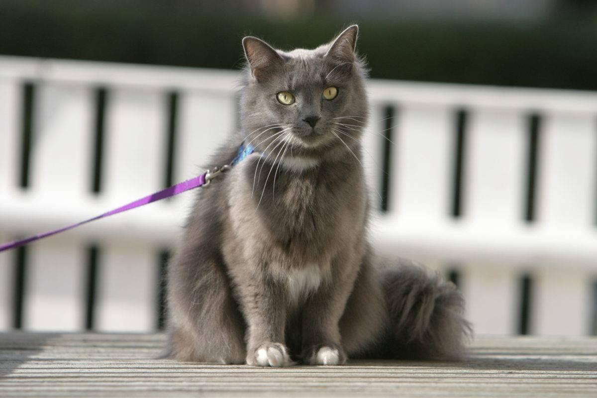 Почему врачи рекомендуют отпускать домашнюю кошку на улицу