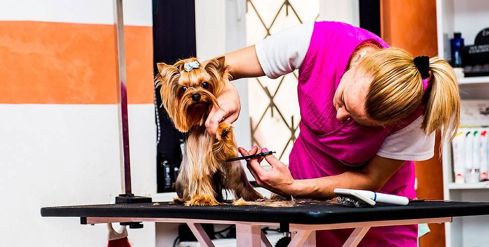 Как называют парикмахеров собак. груминг — парикмахерские услуги для домашних питомцев - заболеваний нет