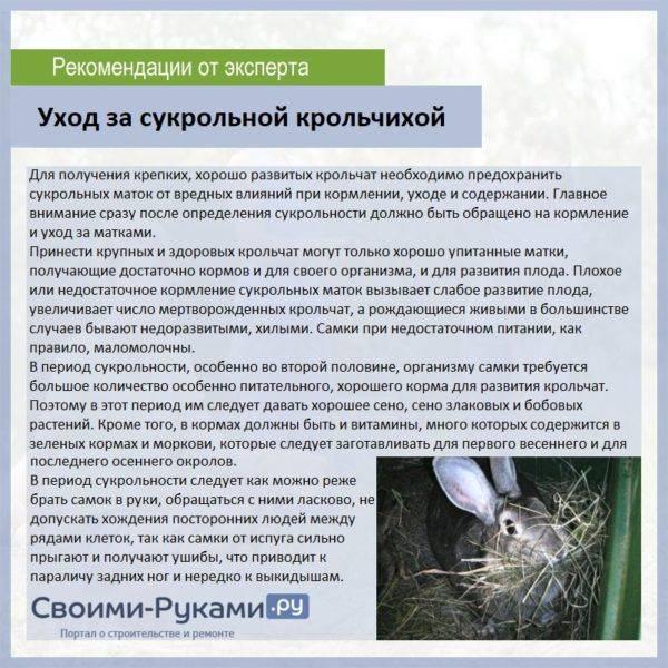 Кролики: беременность и роды
