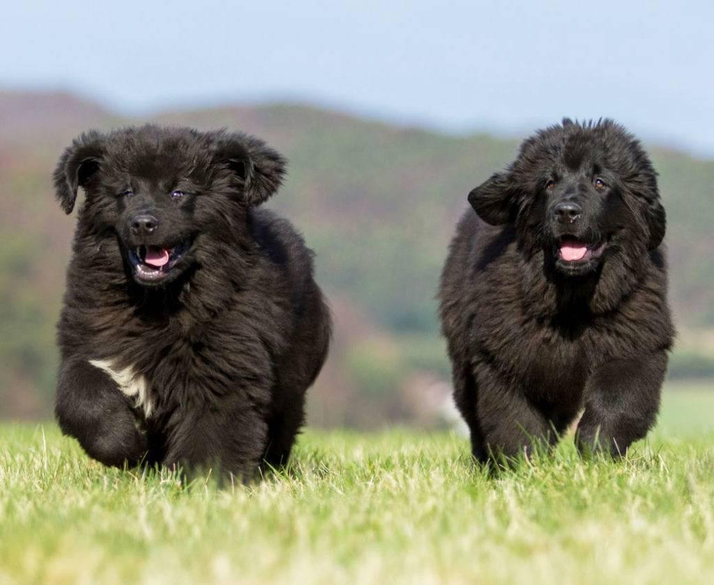 Как выбрать самую спокойную собаку: обзор питомцев маленького и среднего размера
