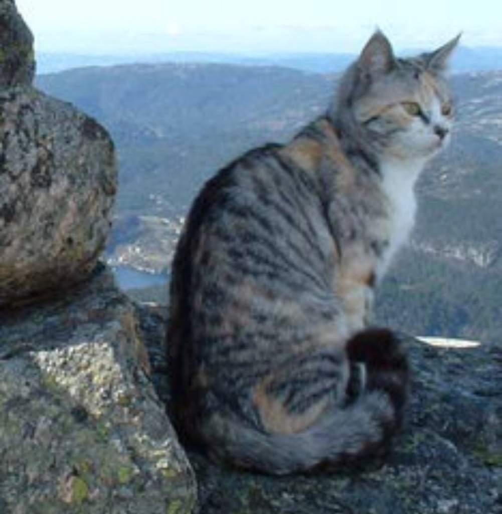 Табби: что за окрас у кошек, как выглядит, виды и классификация,