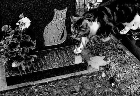 Где хоронить кота. где и как правильно похоронить кошку (деликатная тема)