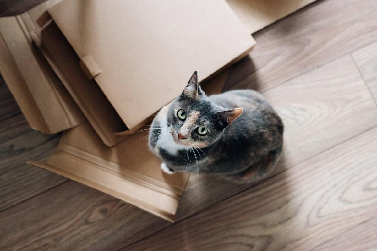 Как познакомить кошку с другими животными в доме | хиллс