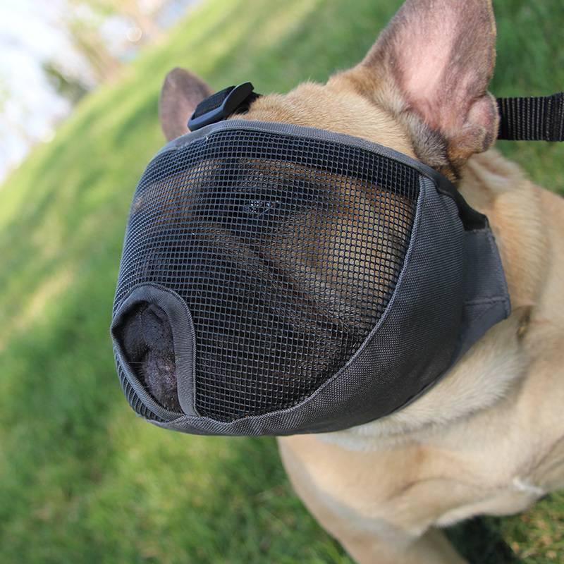 Шлейка для собаки - за и против