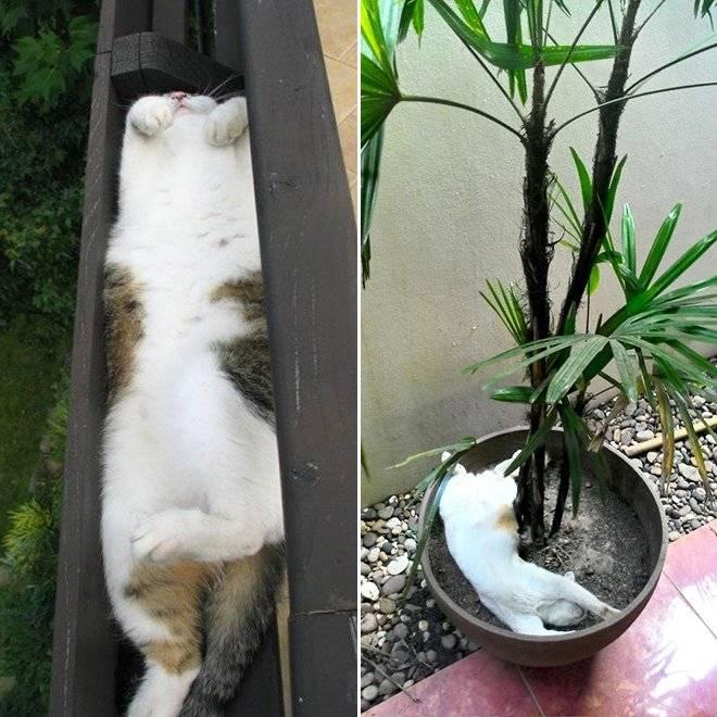 Sos!!!  кошка ест домашние цветы. - страна мам