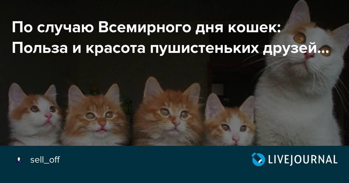 Всемирный день котов и кошек   1 марта, россия
