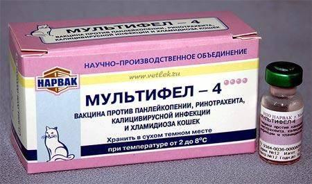 Мультифел-4, инструкция по применению для кошек и котят: от чего эта прививка, куда колоть вакцину?