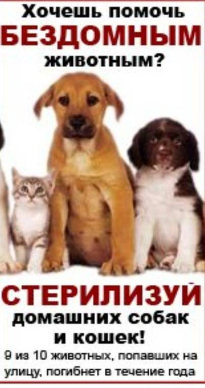 Неможете пройти мимо бездомного щенка? объясняем, как помочь животному