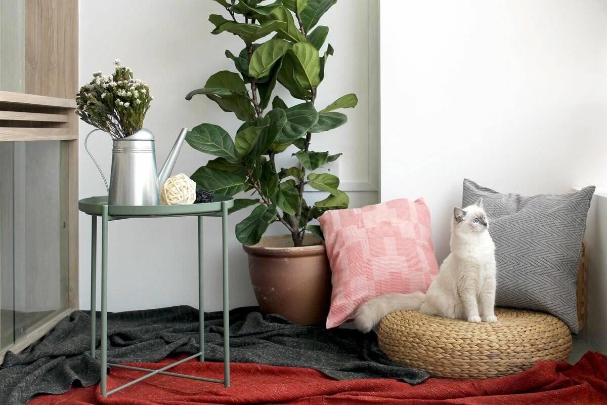 Что важнее для кошки: комфортный дом или любящий человек