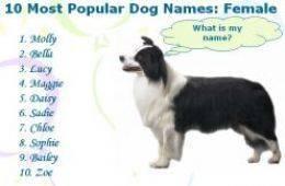 Все самые популярные клички для собак мальчиков и девочек