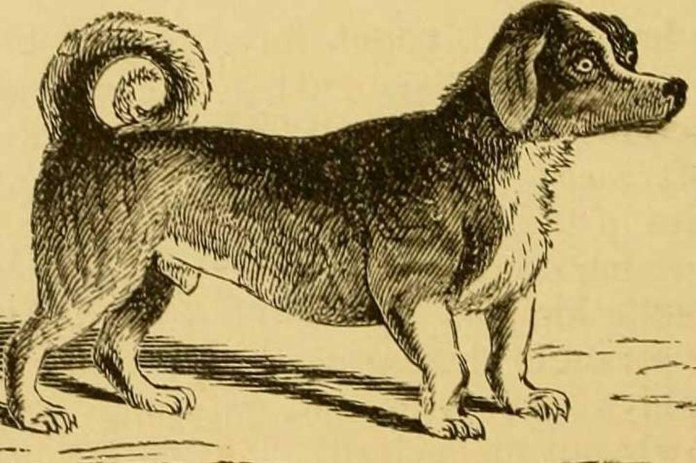 Какая самая древняя собака? топ-14 древних пород