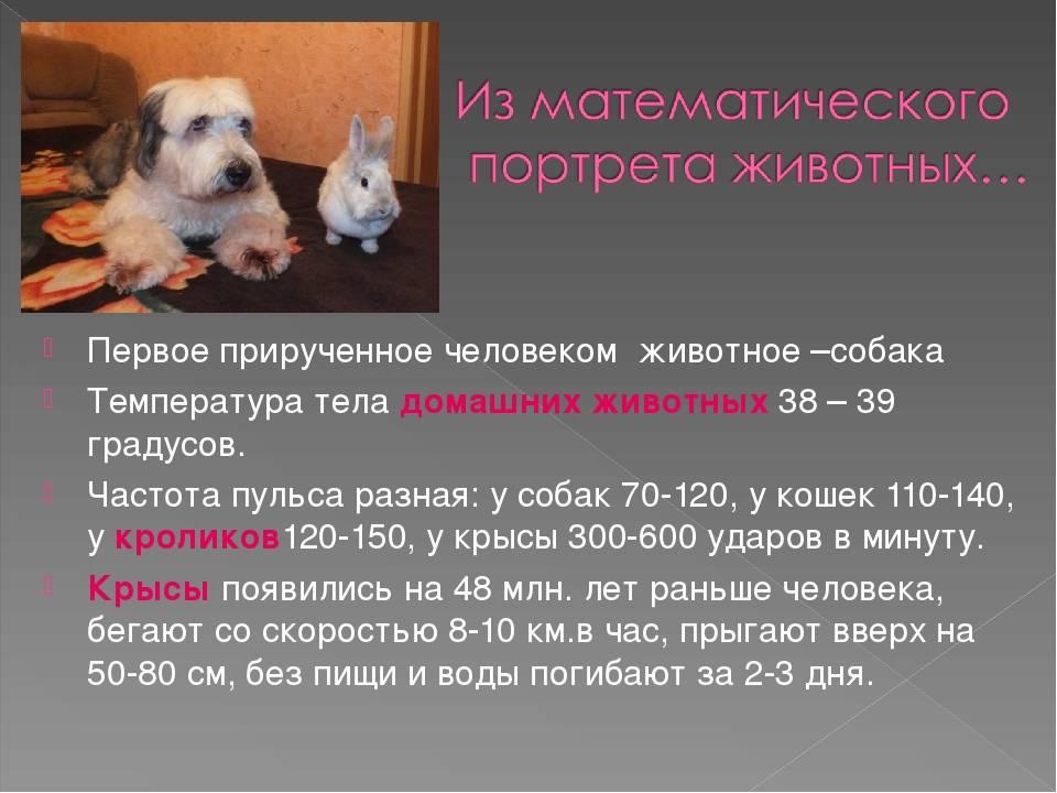 Как померить температуру собаке: определить без градусника в домашних условиях, проверить обычным, ртутным градусником, узнать есть ли дома