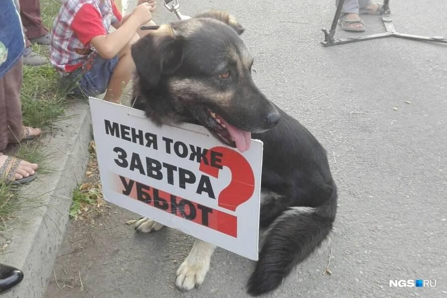 Живой вопрос: можно ли справиться с нападениями бездомных собак | статьи | известия