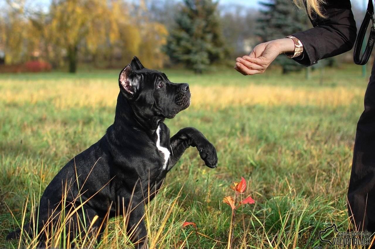 """Какие породы собак самые опасные для человека?   блог ветклиники """"беланта"""""""