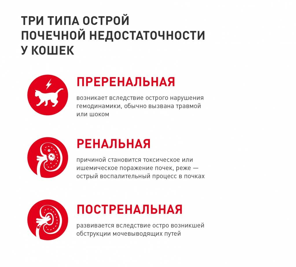 Болезни почек у кошек. хроническая болезнь почек (хбп).