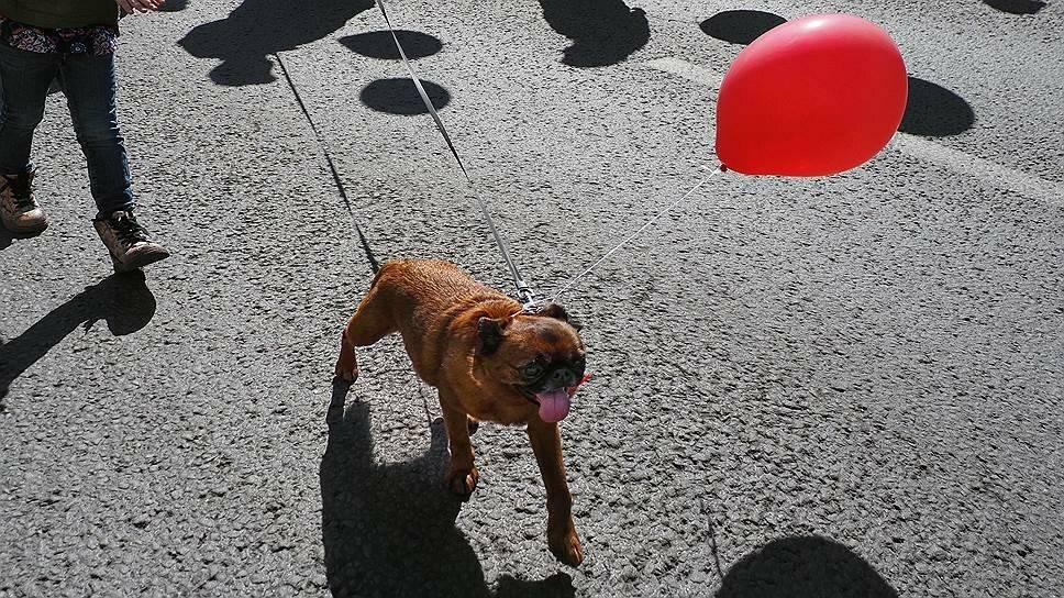 7 штрафов, которые грозят владельцам собак в 2020 году