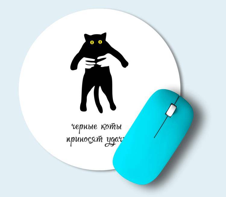 Черная кошка в доме — оберег от негатива