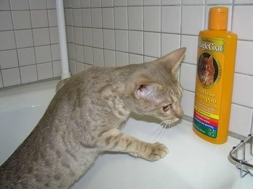 Как мыть крыс в домашних условиях: необходимые принадлежности, пошаговая инструкция