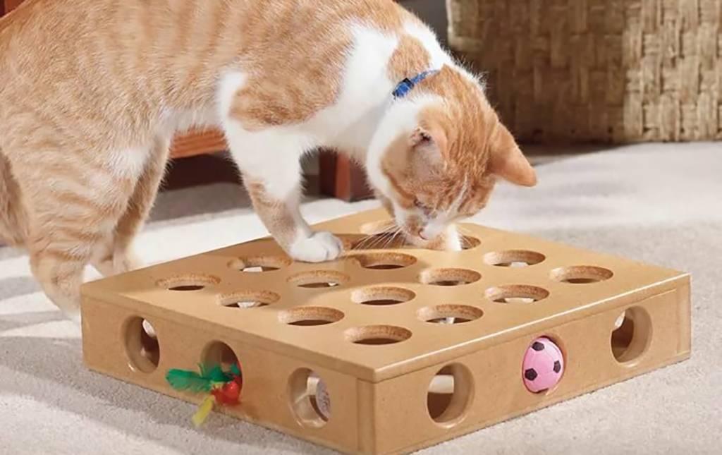 Игры с кошкой - почему они любят играть, список игрушек для животного