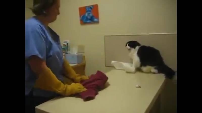 Роды у кошки: признаки, уход до и после родов, как принять роды