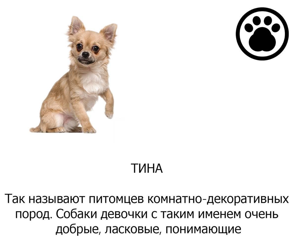 Самые смешные клички животных / statusname