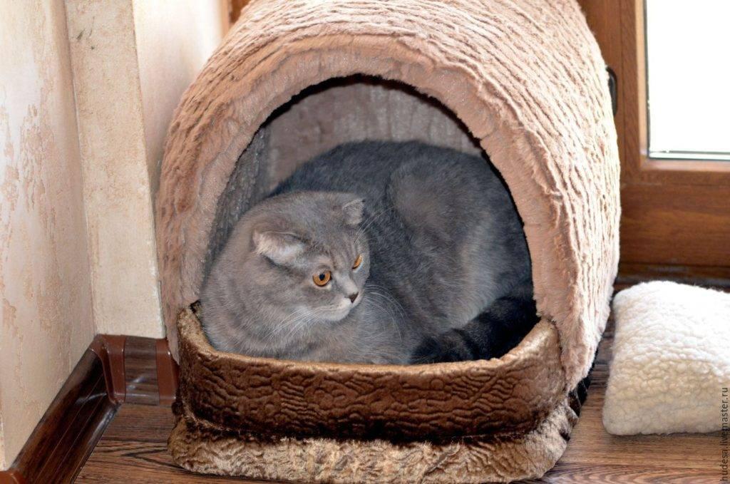 15 советов, которые облегчат жизнь кошкам в доме и сделают их счастливее