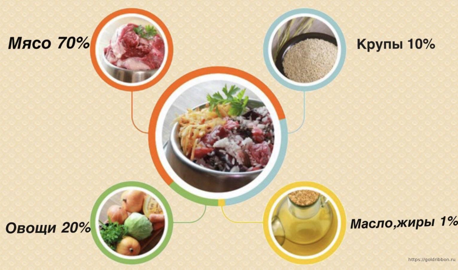 Еда для собак: натуральное питание или промышленные корма, потребность в витаминах, сколько раз кормить собаку, как правильно готовить еду, запрещенные продукты
