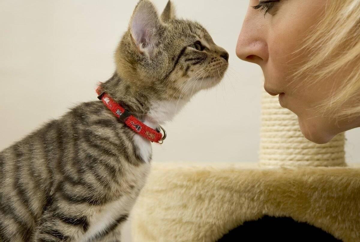 Как показать кошке, что ты ее любишь: кошачий язык