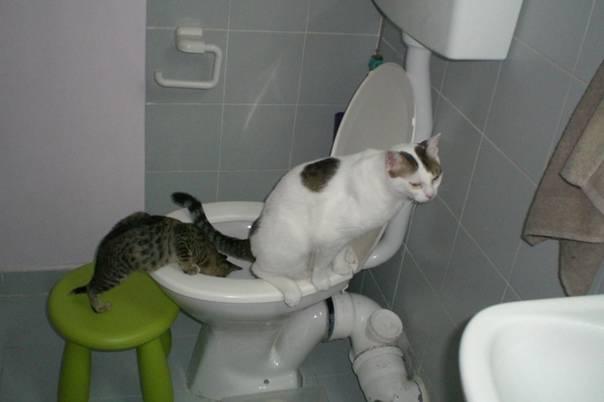 5 признаков того, что кошке не нравится гость квартиры | gafki.ru | яндекс дзен