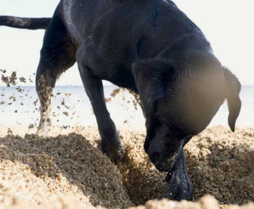 Почему собака ест свой или чужой кал: физиологические и психологические причины копрофагии у собак, 6 способов отучения, полезные советы