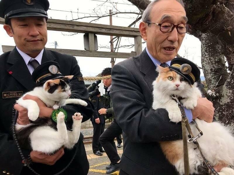 Как кошка-спасатель спасла железнодорожную станцию в японии