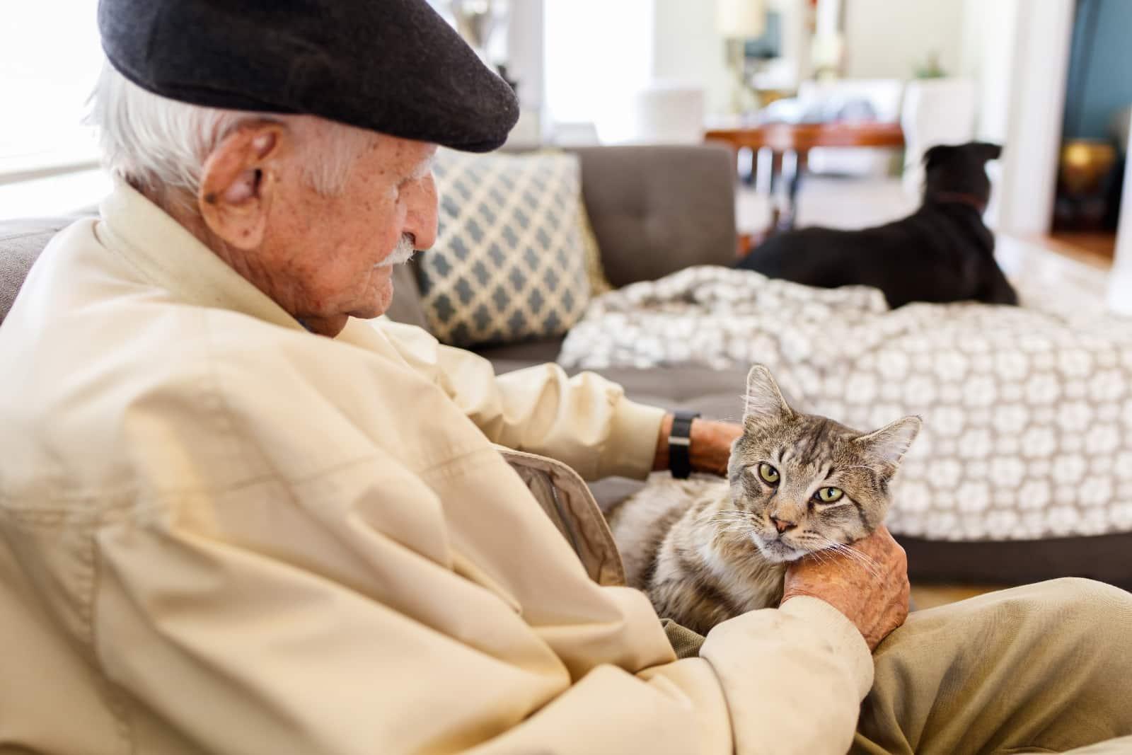 Возрастная кошка в доме