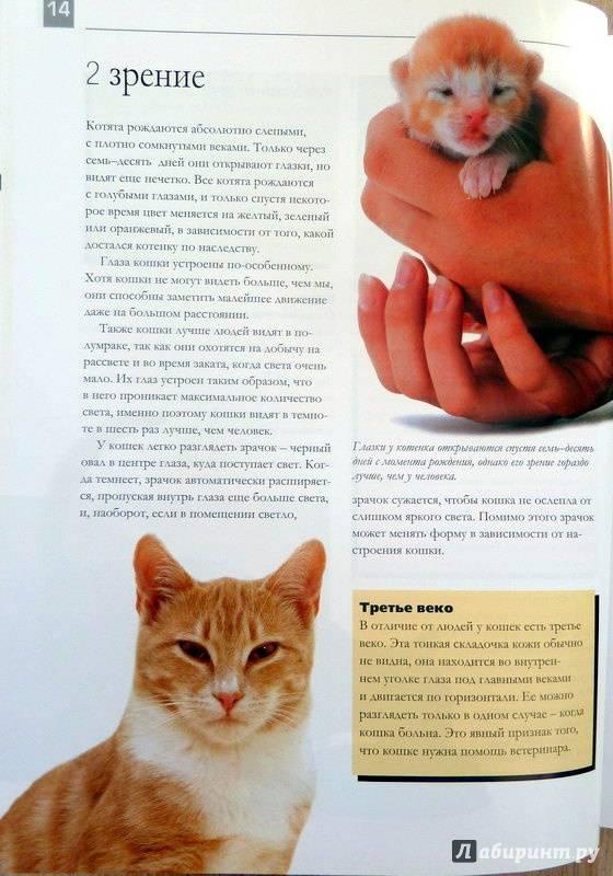 Нюансы воспитания котёнка и наиболее распространённые ошибки